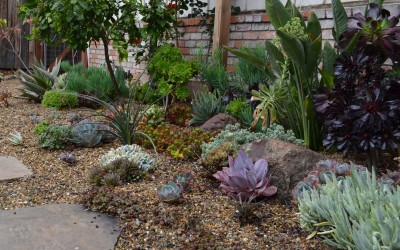Wanted: Water-wise Gardens for Garden Tour!