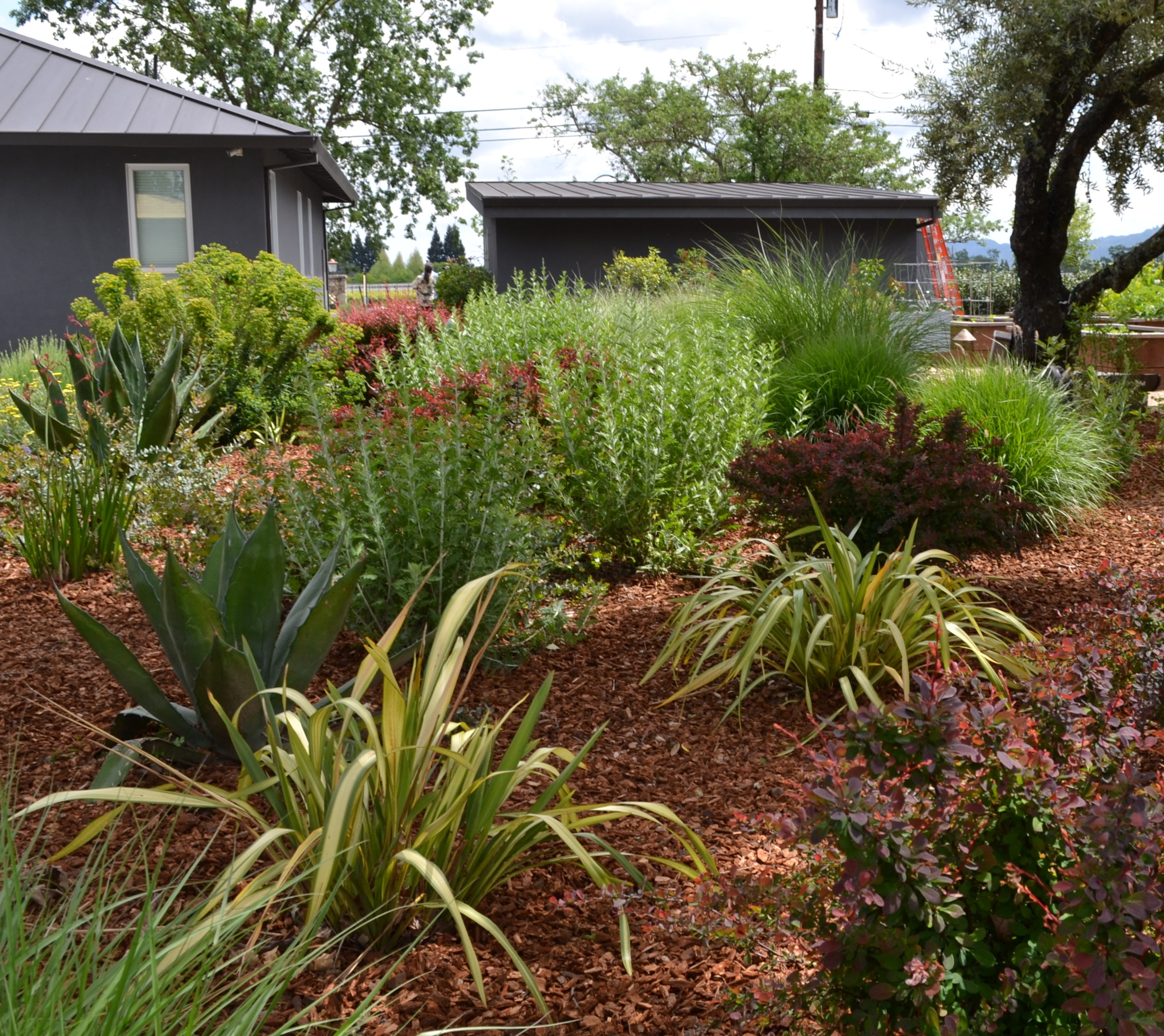 Bay-Friendly Garden Open House – Oct 4 – Napa County RCD