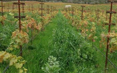 Winterizing Your Vineyard